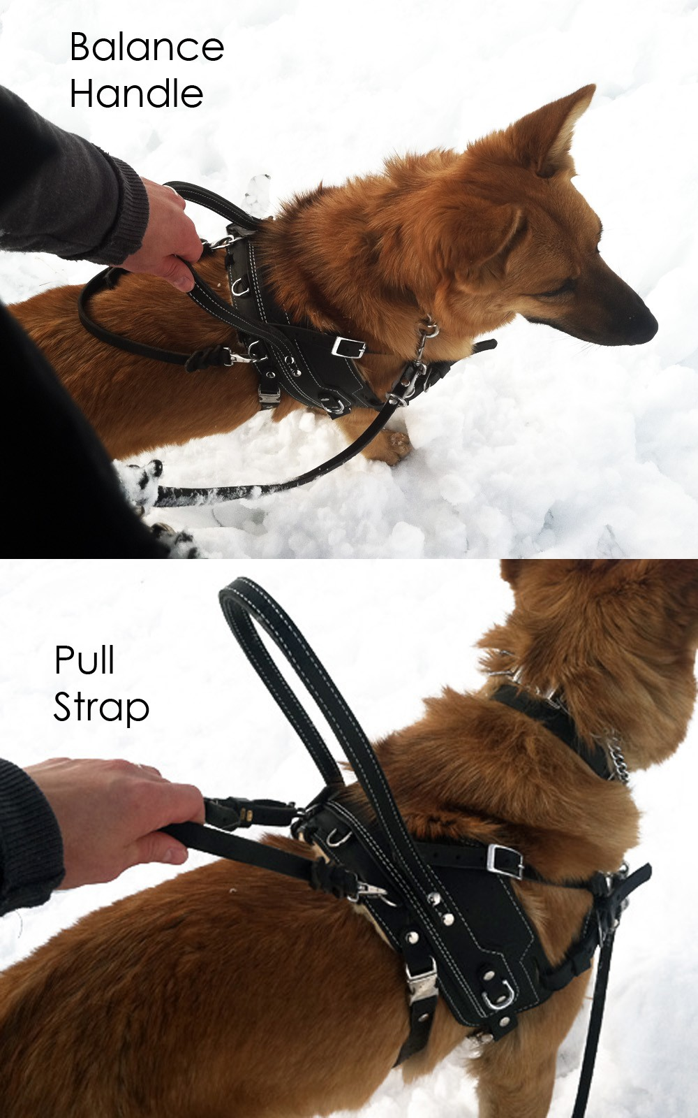 Bld Bah Assistance Dog Harness