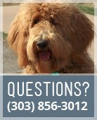 Questions? Call 303-856-0012