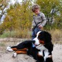 So effective a child can walk a large breed dog