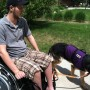 Short leash length for working close to wheelchair chair