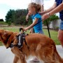 golden retriever ELLIE helps Amanda (child) learn to walk
