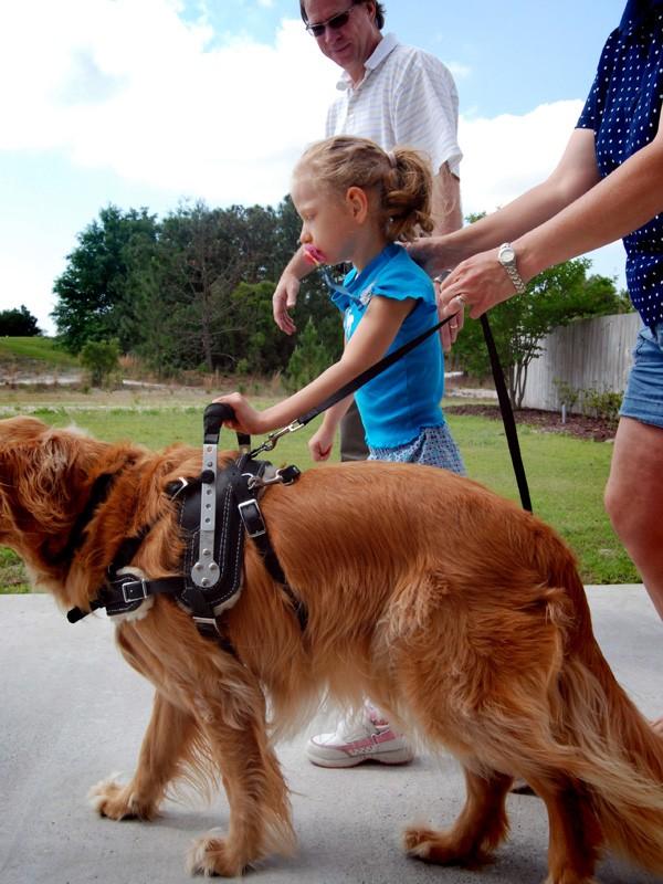 Golden Retriever Ellie Helps Amanda Child Learn To Walk