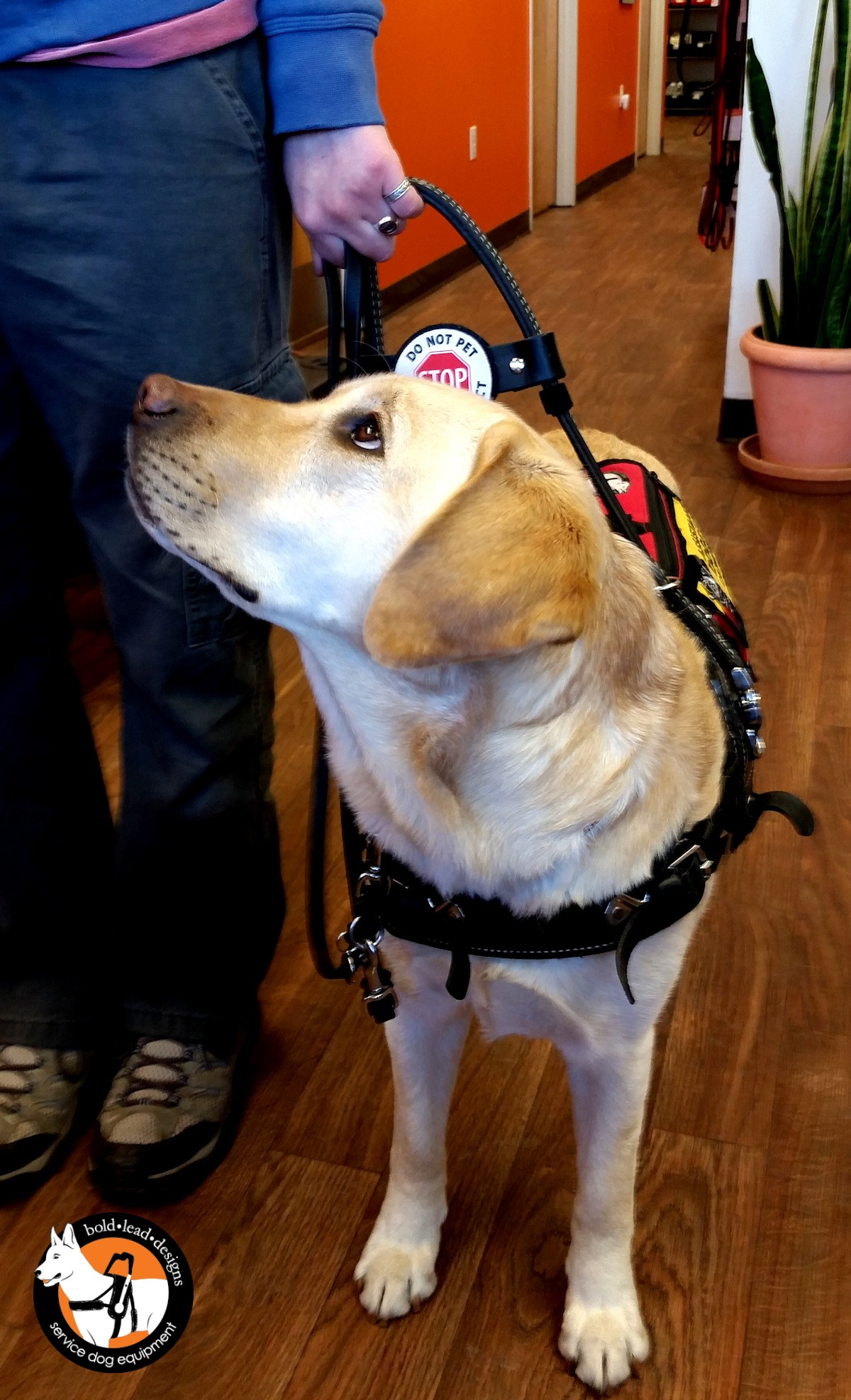 Balance Assistance Harness For Service Dogs Bold Lead