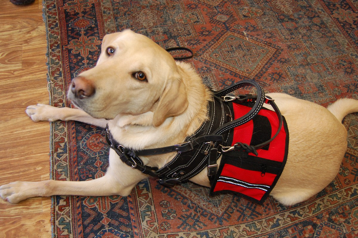 Dog Pulling Equipment For Sale