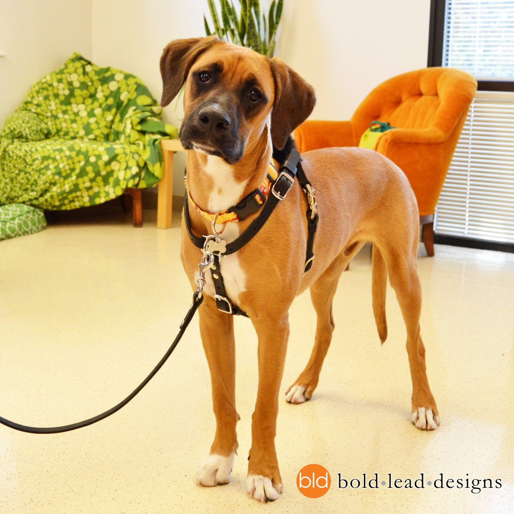 hma Connected Control™ Harness: no-pull dog walking harness ...