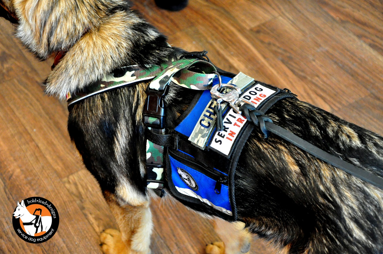 Service Dog Cape/Vest - Bold Lead Designs
