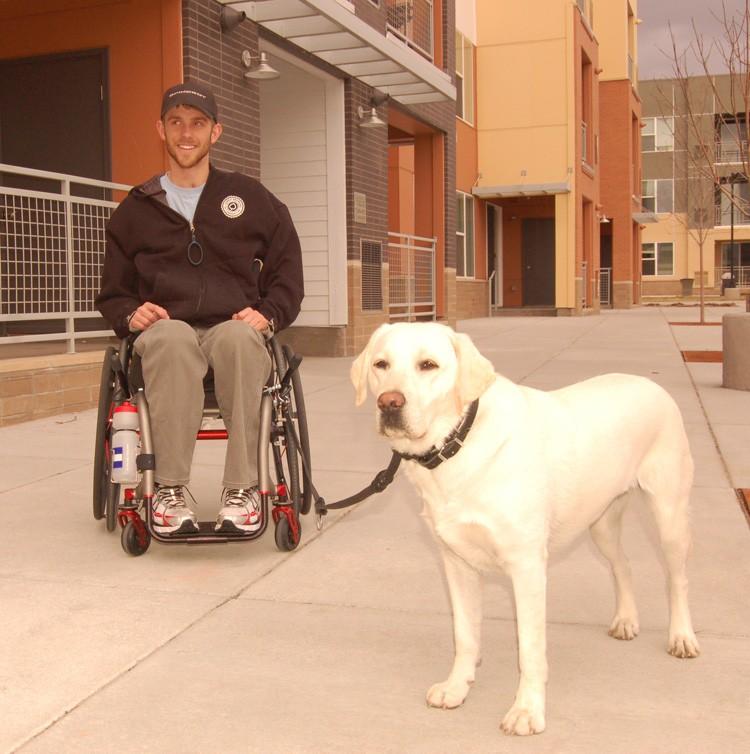 Quad Wheelchair Hook Leash Long Length on Leather Dog Harness