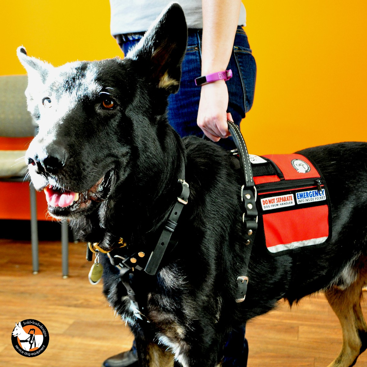 Service Dog Cape Vest Bold Lead Designs