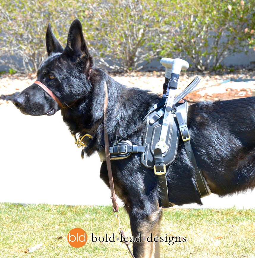 What Does It Take To Be A Service Dog