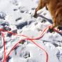 Brahma in snow_6564
