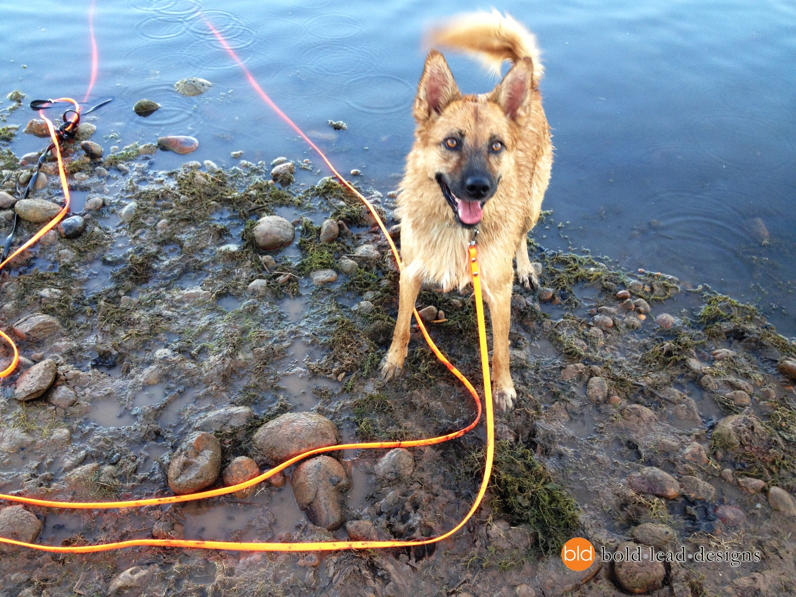 Dog Training Leads For Sale