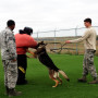 Brahma Lead during K-9 training exercises at Buckley AFB