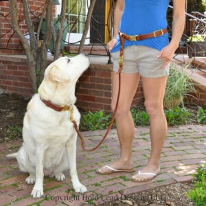 Belt Leash System with QR buckle on model