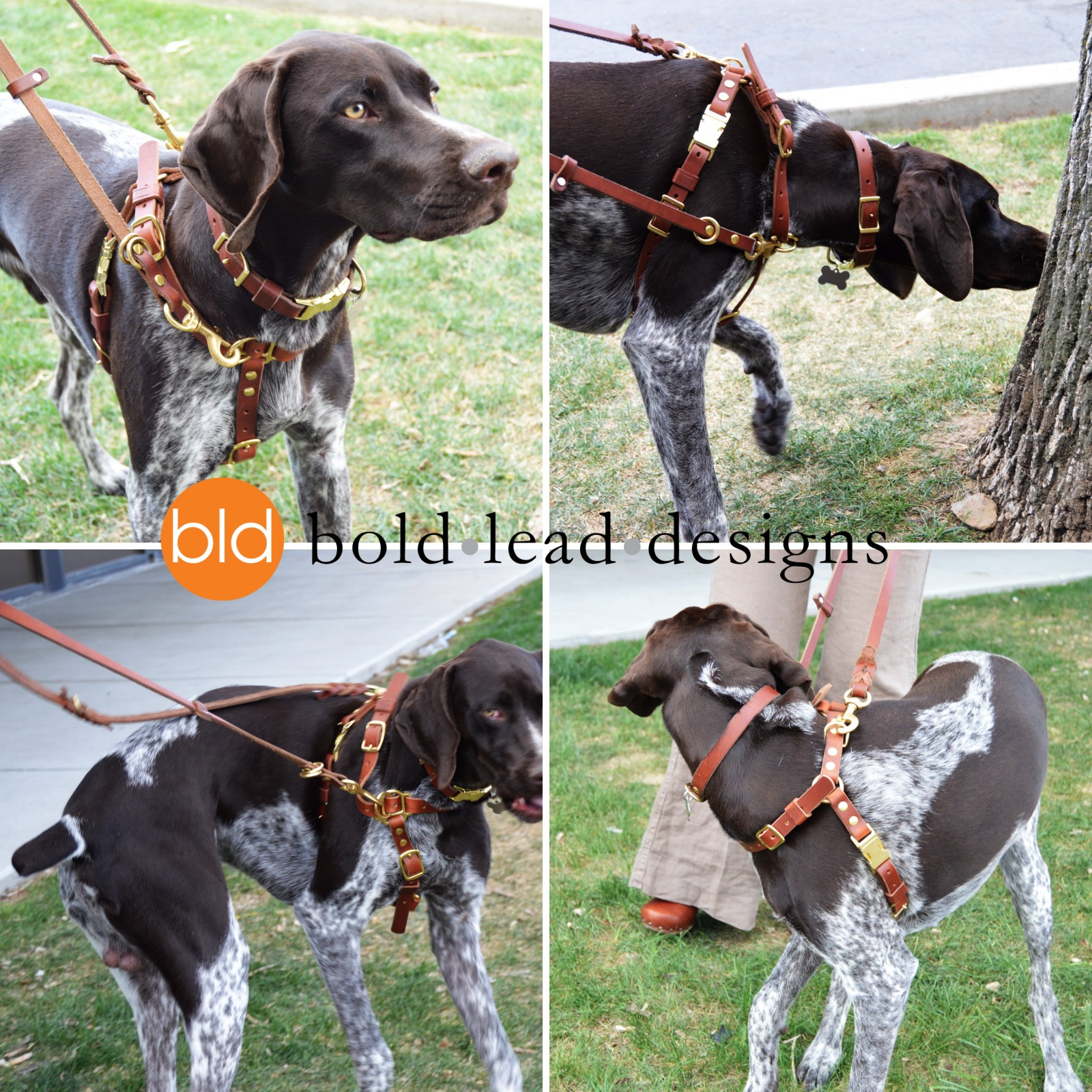 Connected Control™ Harness: a Leather no-pull dog walking harness
