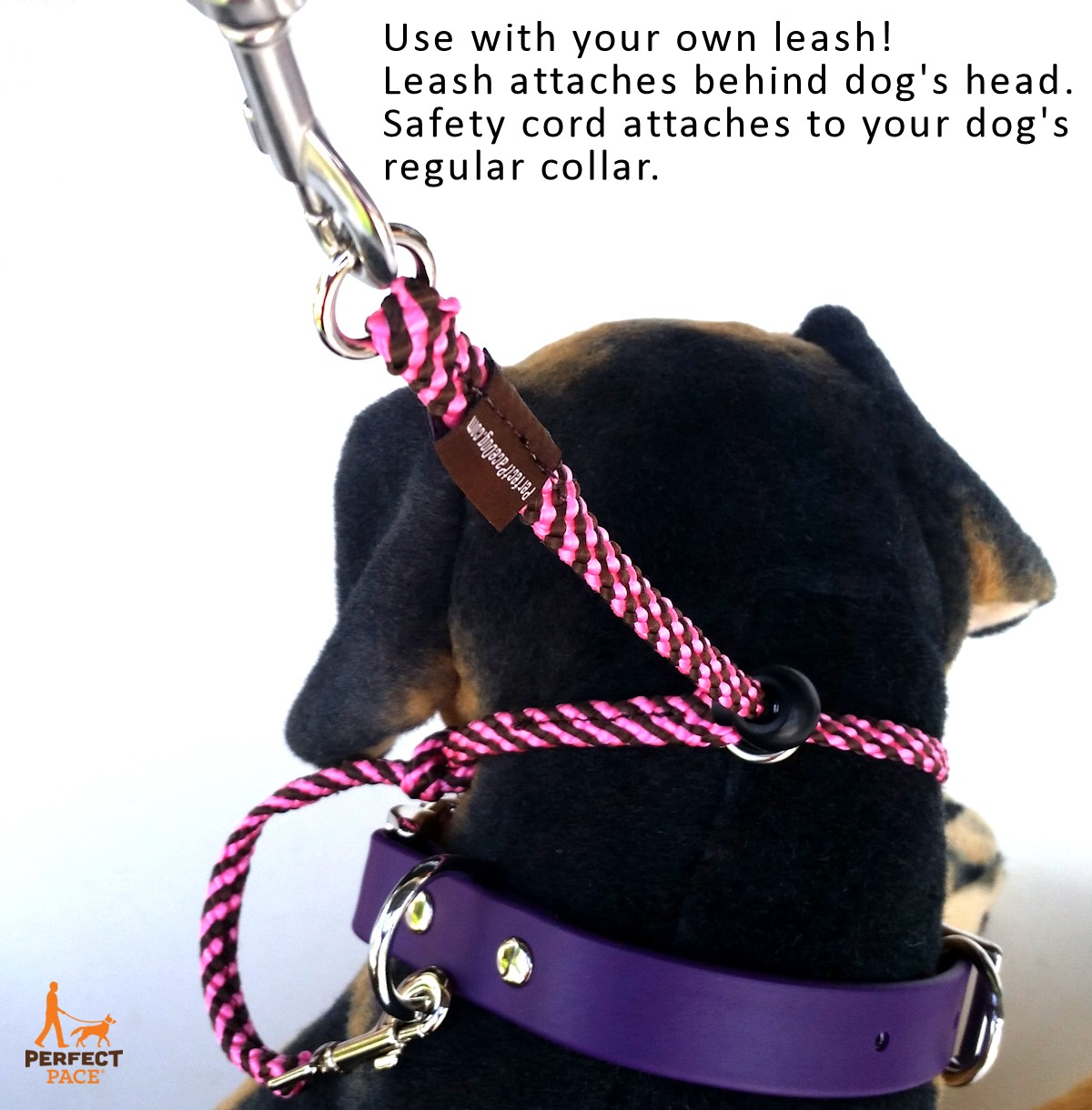 The Perfect Pace No Pull Dog Halter Bold Lead Designs